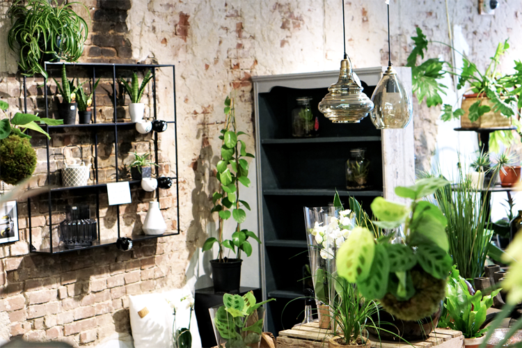 Indoor Plants Shop Alkmaar Interior
